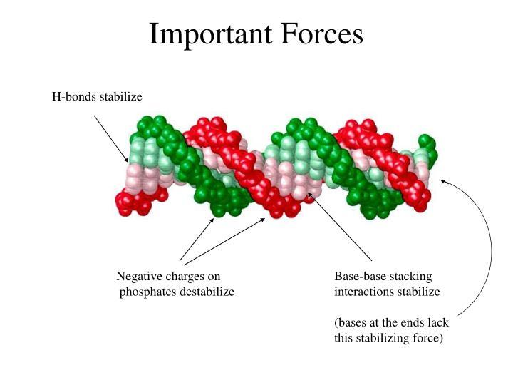 Important Forces