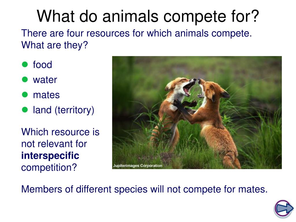 PPT - Competition in Animals PowerPoint Presentation, free ...