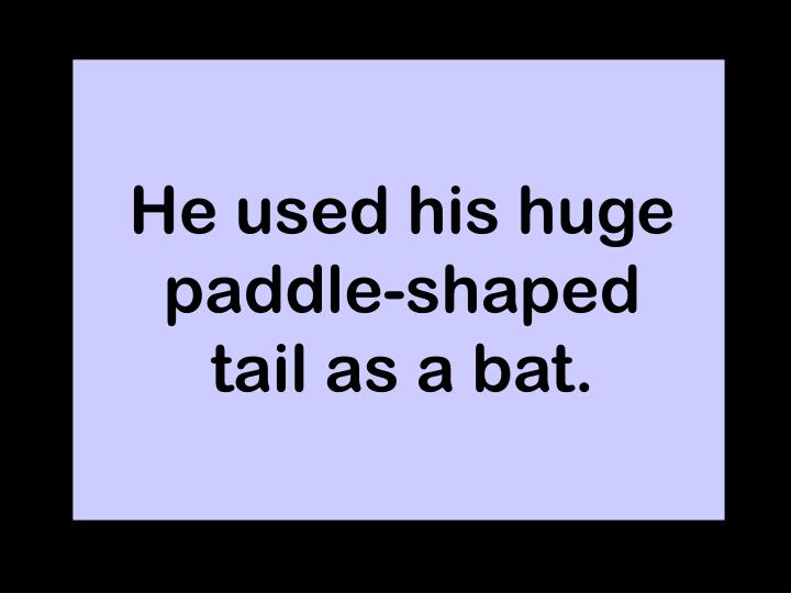 He used his huge paddle-shaped tail as a bat.