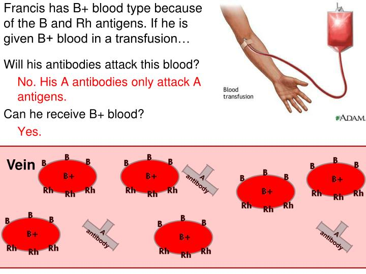 Francis has B+ blood type because of the B and Rh antigens. If he is given B+ blood in a transfusion…