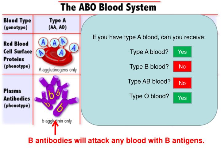 If you have type A blood, can you receive: