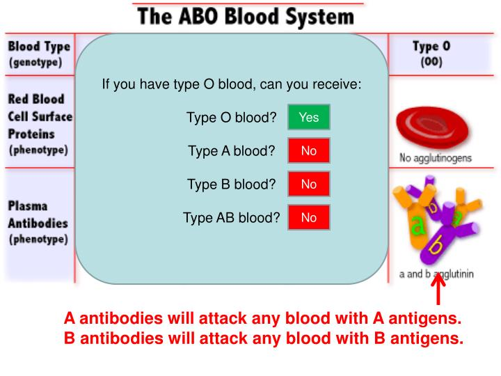 If you have type O blood, can you receive: