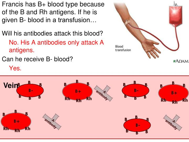 Francis has B+ blood type because of the B and Rh antigens. If he is given B- blood in a transfusion…
