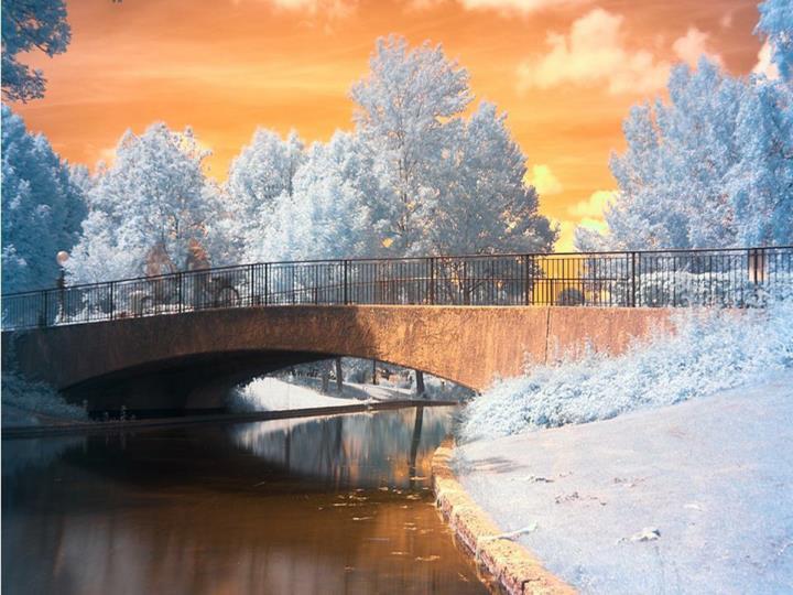 Beaut de l hiver