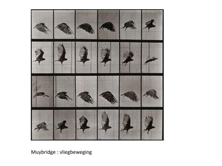Muybridge :