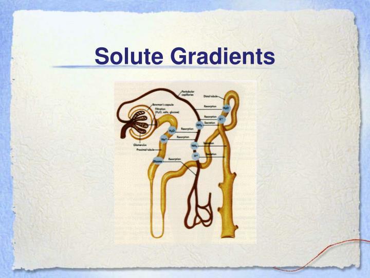 Solute Gradients