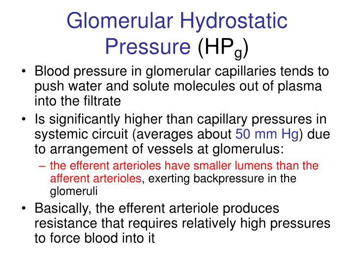 Glomerular Hydrostatic