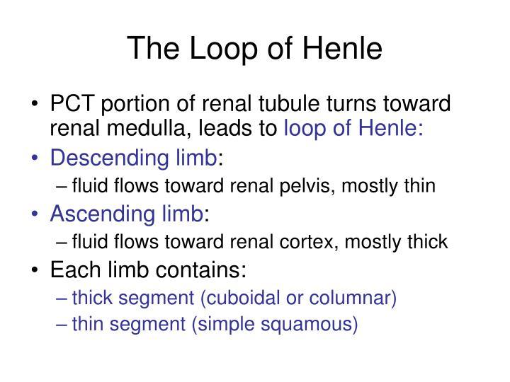 The Loop of Henle