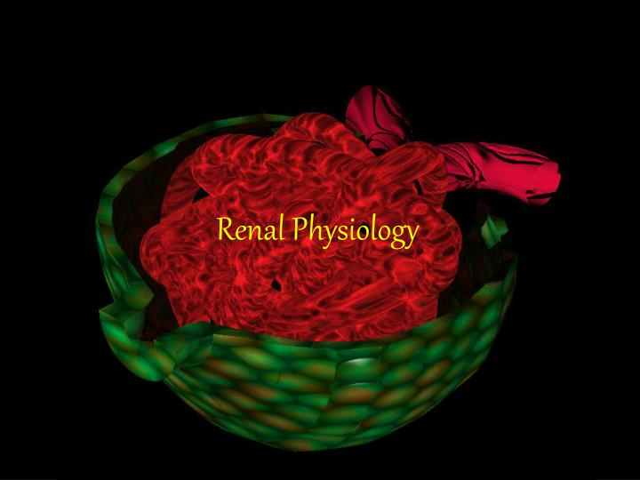 renal physiology n.