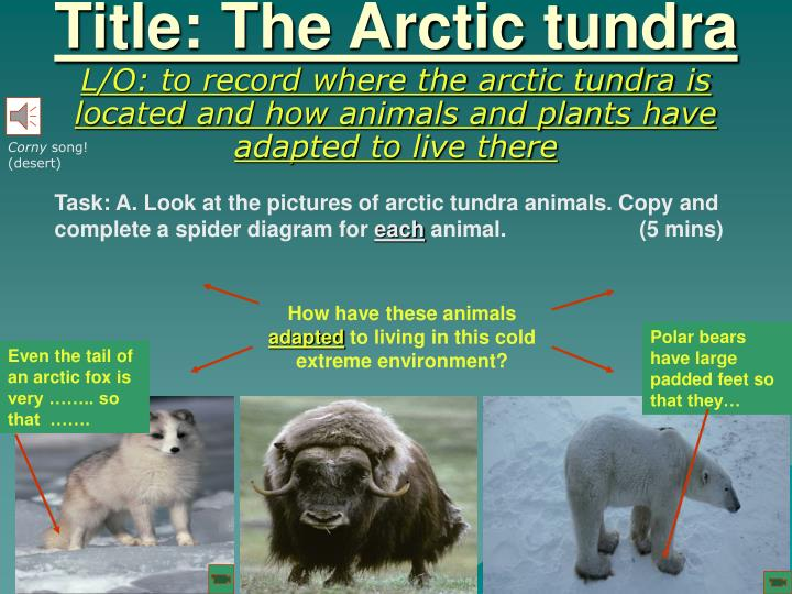 Title the arctic tundra