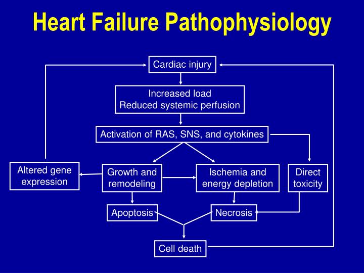Heart Failure Pathophysiology