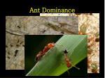 ant dominance
