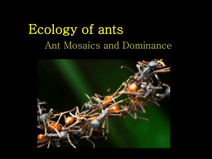 ecology of ants n.