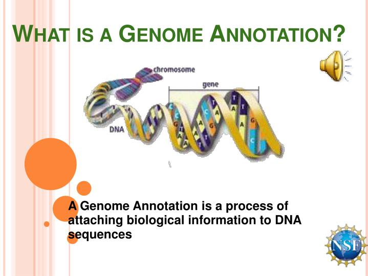 What is a Genome Annotation?