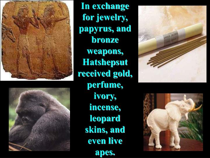 In exchange for jewelry, papyrus, and bronze weapons, Hatshepsut received gold, perfume, ivory, incense, leopard skins, and even live apes.
