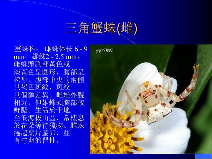 蟹蛛科: 雌蛛体长