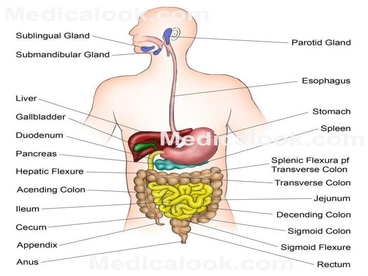 Medical terminology t sanaa abdel hamed