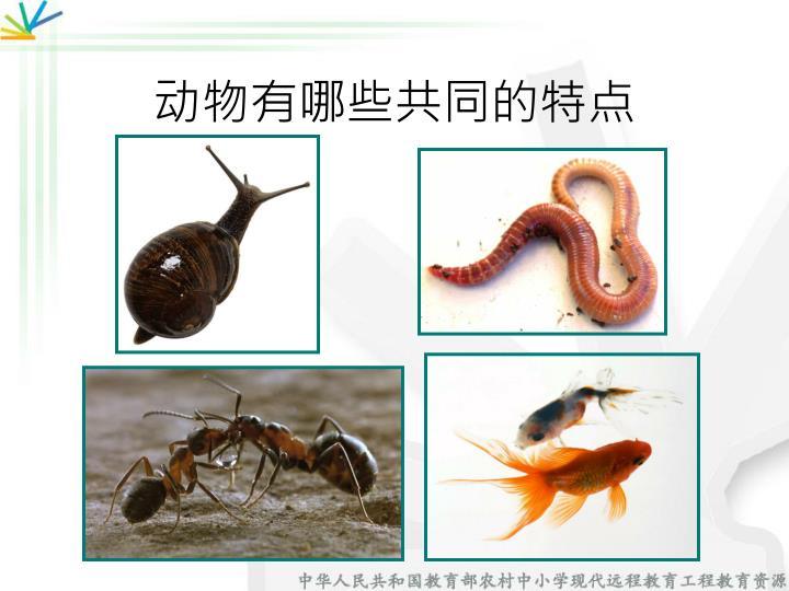 动物有哪些共同的特点