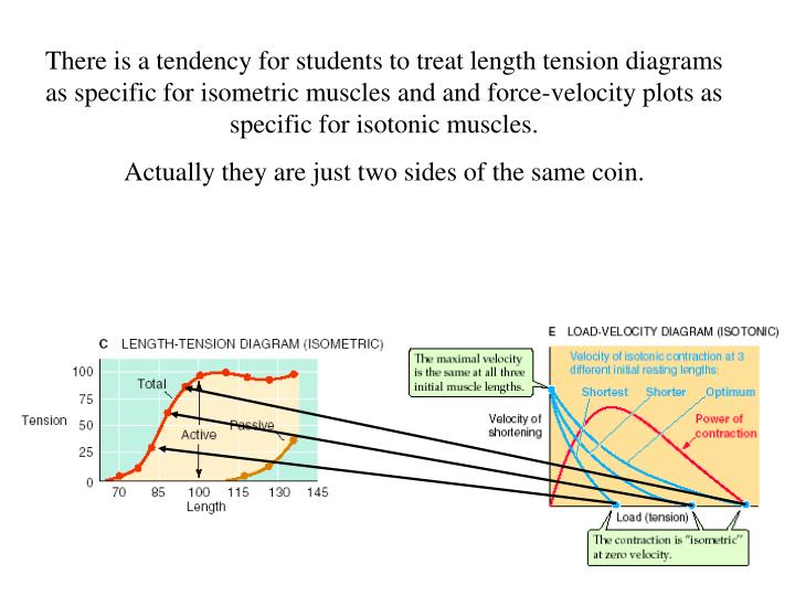 There is a tendency for students to treat length tension diagrams as specific for isometric muscles and and force-velocity plots as specific for isotonic muscles.