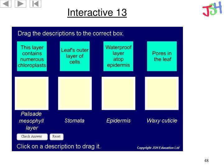 Interactive 13