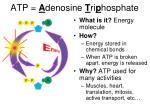 atp a denosine t ri p hosphate