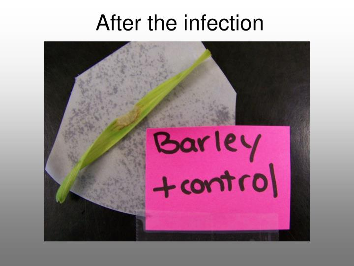After the infection