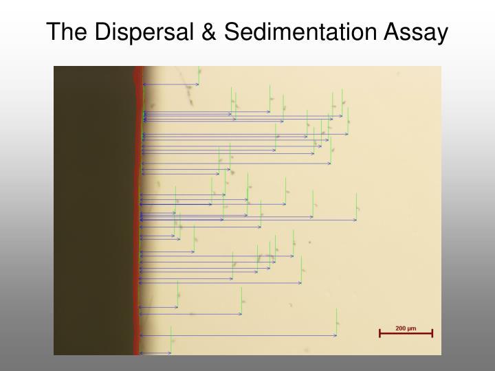 The Dispersal & Sedimentation Assay