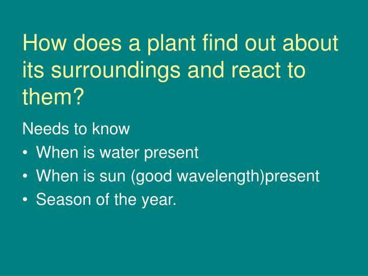 How does a plant find out about its surroundings and react to them