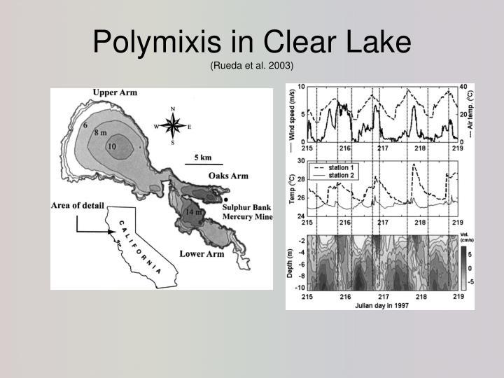 Polymixis