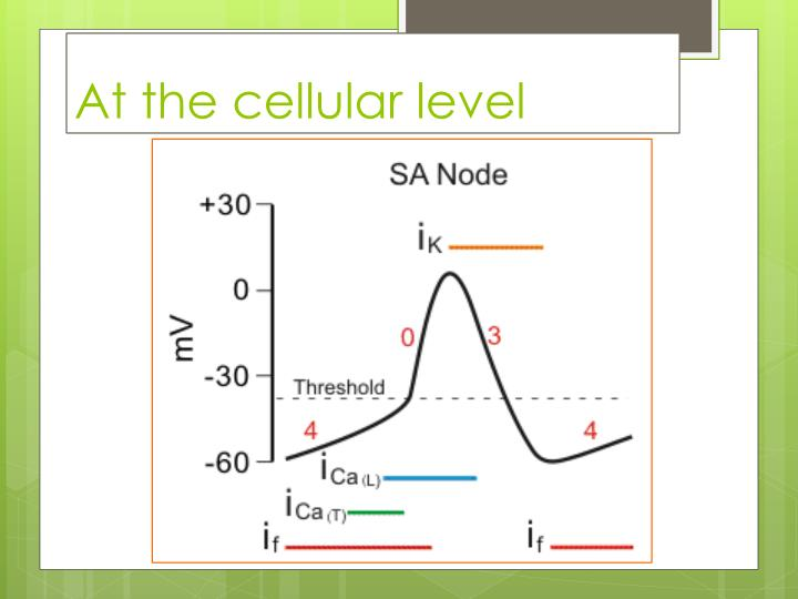 At the cellular level