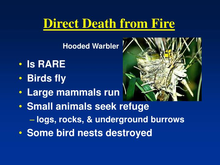 Direct Death from Fire
