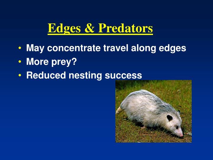 Edges & Predators