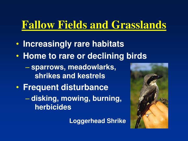 Fallow Fields and Grasslands