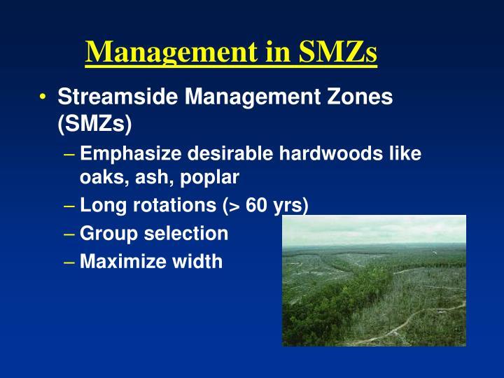 Management in SMZs