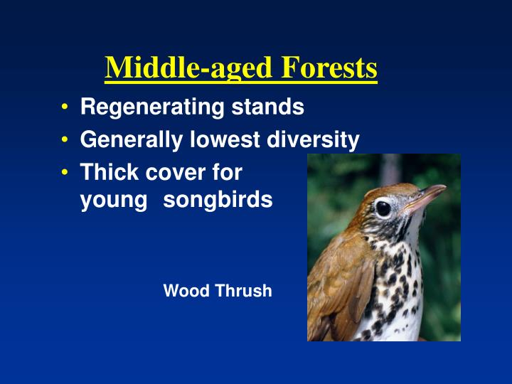Middle-aged Forests