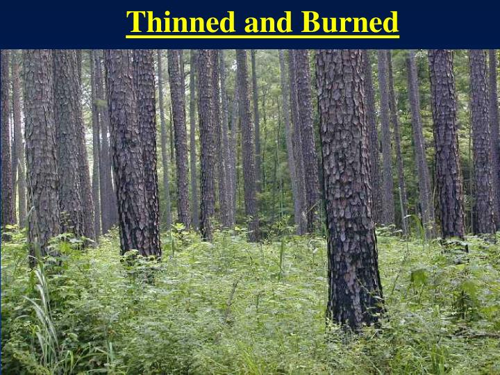 Thinned and Burned