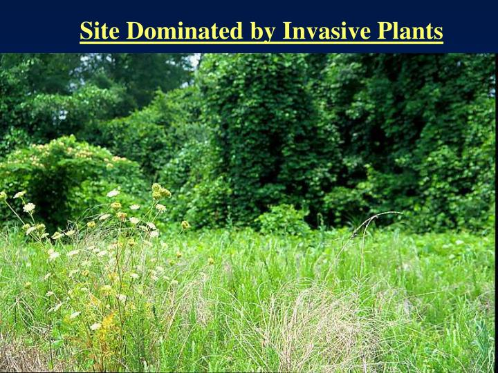 Site Dominated by Invasive Plants