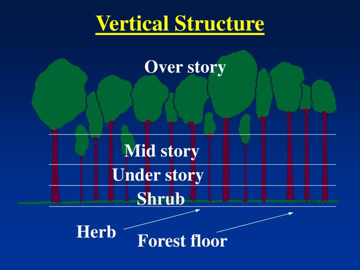 Vertical Structure