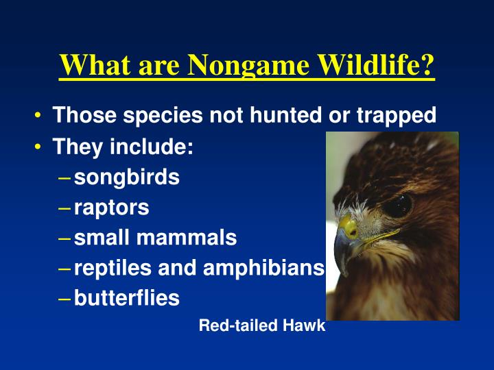 What are Nongame Wildlife?