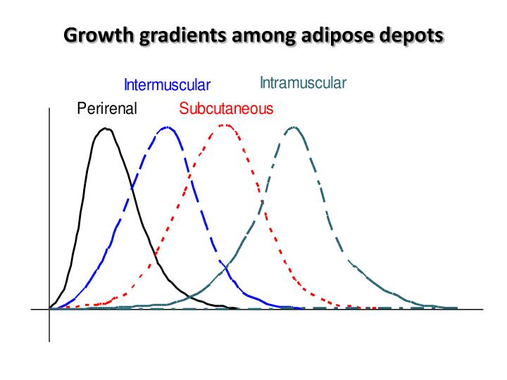 Growth gradients among adipose depots