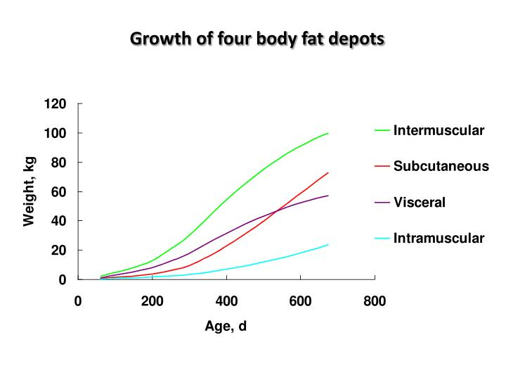 Growth of four body fat depots