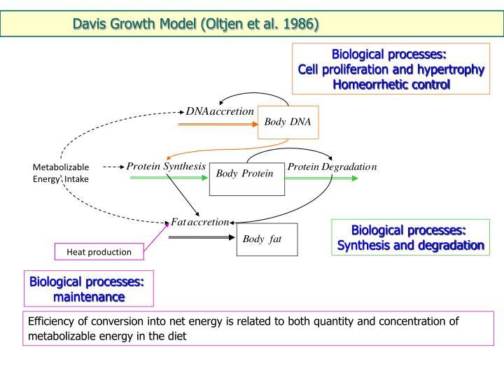 Davis Growth Model (Oltjen et al. 1986)