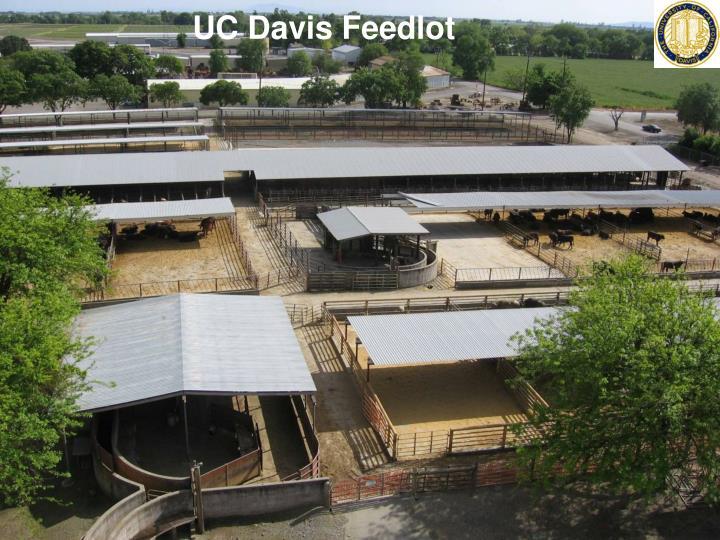 UC Davis Feedlot
