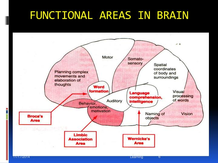 FUNCTIONAL AREAS IN BRAIN