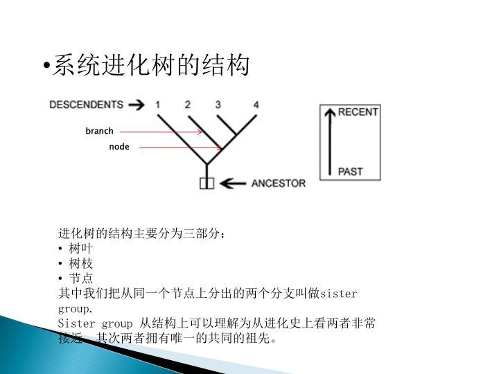 系统进化树的结构