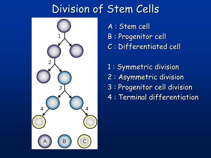 A : Stem cell