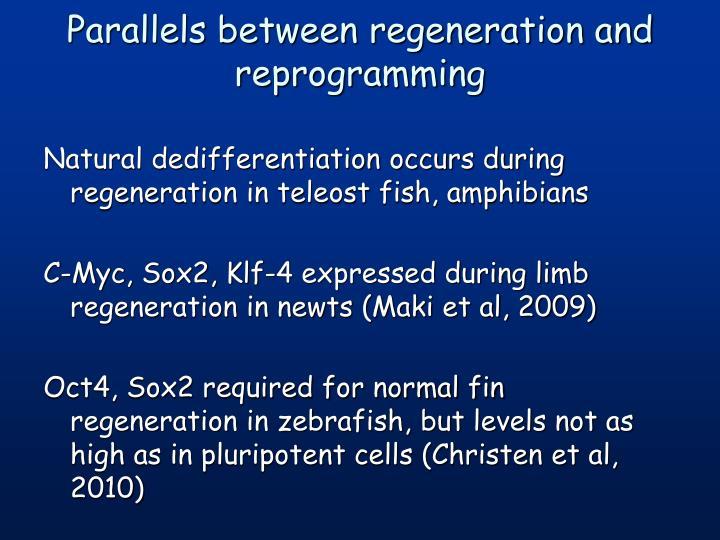 Parallels between regeneration and reprogramming