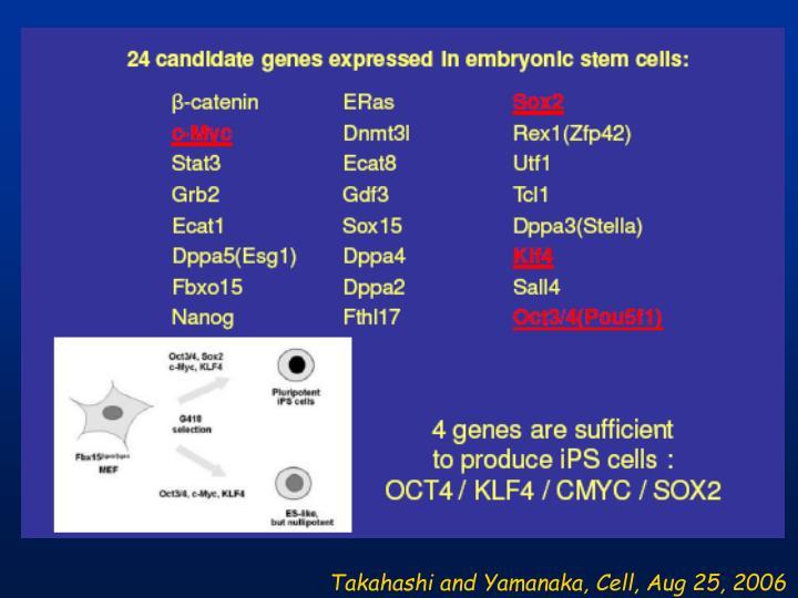 Takahashi and Yamanaka, Cell, Aug 25, 2006