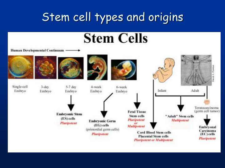 Stem cell types and origins