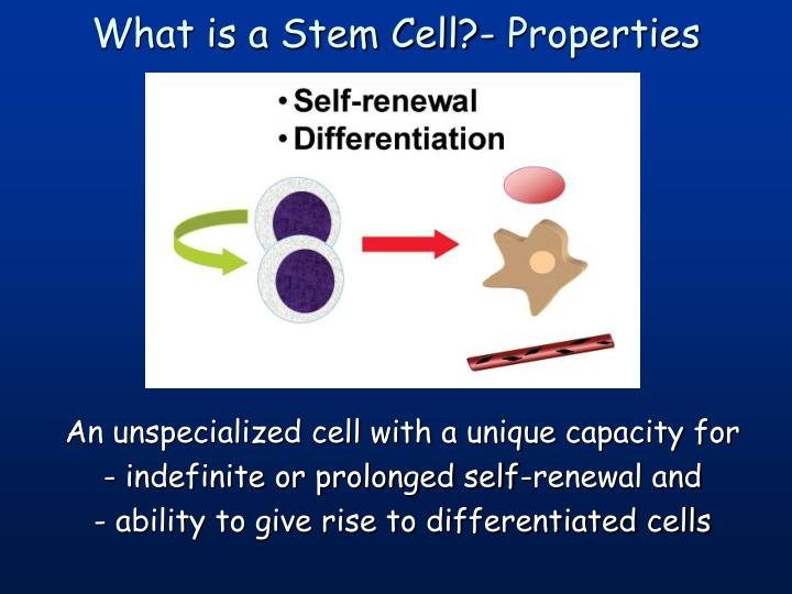 What is a stem cell properties